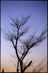 winter (nabenori) Tags: fm3a tree silhouette sky urbannature