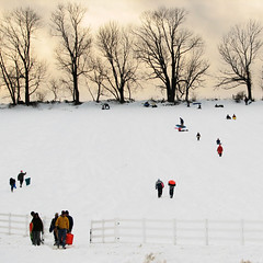 Sledding on Horsebarn Hill, 1 - by *CA*
