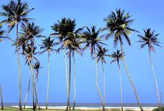 Goa, India (Peter Bongers) Tags: travel sea india beach palms nikon asia goa culture southasia nikonstunninggallery peterbongers peterbongers