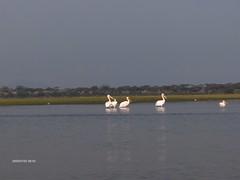 HPIM1356 (http://jvverde.birdsby.me/v2/) Tags: africa travel kenya frias safari viajes viagem viagens vacations hollidays qunia