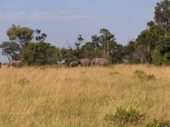 HPIM1617 (http://jvverde.birdsby.me/v2/) Tags: travel kenya safari viajes lixo viagens vacations hollidays qunia lixo2