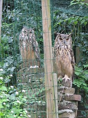 uilen/ owls ( Annieta  - on/off) Tags: trees tree nature animal animals tag3 taggedout canon ilovenature mirror interestingness twins tag2 tag1 scout powershot explore owl g2 allrightsreserved i500 annieta theworldthroughmyeyes thebiggestgroup kakadoo multicoloredobject bochoven vanbochoven usingthisphotowithoutpermissionisillegal