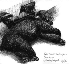 Ink Sketch of Rosie Sleeping by Susan Donley