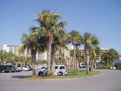 What is the Difference Between a Palm Tree and a Palmetto