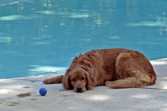Throw the ball in the pool, please