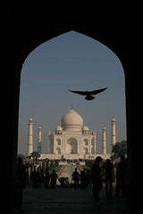 Taj and Pigeon (Captain Suresh Sharma) Tags: travel people india bird art love monument beauty stone wonder holidays asia arch pigeon muslim islam famous agra tourists unescoworldheritagesite marble visitors popular birdinflight sevenwondersoftheworld touristdestination indianmarvel captsureshsharma archeologicalmonument mostfamous