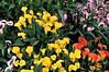 I COLORI DELLA NATURA. (Salvatore Lo Faro) Tags: italy verde nature calle nikon italia calla milano natura giallo fiori rosso bianco lombardia d300 2015 orticola