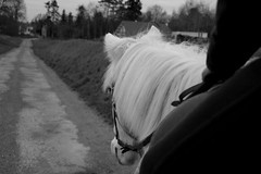 Black and White life. (aurelierouyer) Tags: bw weekend champs camargue balade flocon poney