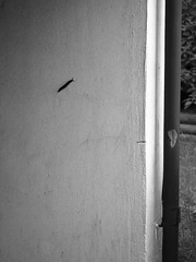 EE180014 - wall climbing snail (Mytacism) Tags: bw monochrome animal wall lost map garage snail olympus omd em1 bwd