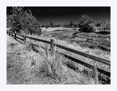 Split Rail Cedar (Martin Smith - Having the Time of my Life) Tags: blackandwhite bw canada fence bc britishcolumbia surrey crescentbeach martinsmith blackiespit southsurrey canonpowershots120 happyfencefriday topazbweffects splitrailcedar ©martinsmith