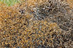 Limaille dacier (zigazou76) Tags: limaille maromme mcaniqueindustrielle tifine