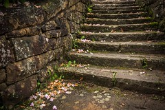 Color stairs (Scott Shields Photo) Tags: park camp west stone stairs virginia petals state steps fallen masons ccc babcock