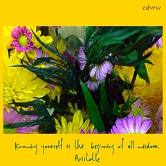 388 (EDWW day_dae (esteemedhelga)) Tags: life flowers plants love beach me nature beauty loving garden blessings creativity hope living walks alone remember peace hand risk friendship time god you faith joy lakes parks belief celebration intelligence thoughts together gift quotes soul future dreams passion knowledge laughter worry strength positive care tomorrow happyholidays yesterday ponds teach sayings herb learn struggle fellowship gentle courage nightmares nurseries encouragement edww daydae esteemedhelga helpconfidence
