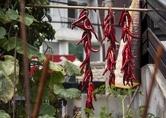 Drying Peppers (Lig Ynnek) Tags: food cuisine gardening seoul hanging peppers tradition southkorea preservation drying gochu yeongdeungpo