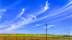 Whispy Clouds (westrock-bob) Tags: blue summer copyright canada clouds canon landscape outdoors eos quiet peaceful ab alberta bigsky canola 6d threehills albertatourism canon6d kneehillcounty canoneos6d bobcuthillphotographygmailcom canolabloom bobcuthill