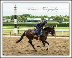 Lauren on Clement Trainee (EASY GOER) Tags: horses horse ny newyork sports race training canon track running racing 5d athletes races thoroughbred equine thoroughbreds belmontpark markiii