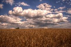 Kornfeld und Wolken (SchaeferNRW) Tags: wolken eifel hdr kornfeld 3xp schaefernrw