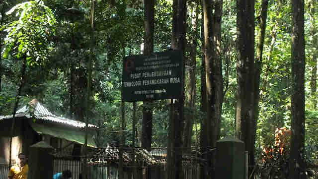Penangkaran Rusa di dramaga Bogor
