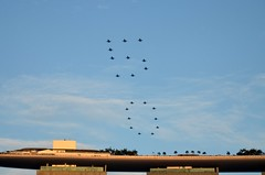 50 Formation Flypast (nighteye) Tags: singapore mbs marinabay lockheedmartin flypast rsaf fightingfalcon f16c fighteraircraft republicofsingaporeairforce marinabaysands sg50 50formation nationaldayparade2015