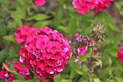 Kootney Provincial Park (mrbrianscott) Tags: flowers canada macro floral garden photography golden britishcolumbia kootney