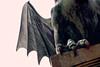 Pata y Ala (Don César) Tags: slovenia eslovenia europe europa dragon statue logo city wing ala pata feet sculpture monument ljubljana capital bridge ljubljanica