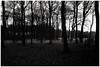 Fog at last light. Nettlebed, Oxfordshire. 29th December 2016 (Flat Twin) Tags: nettlebedoxfordshire rural rurallife leicammonochrom leicamm leica35mmsummicronasph leica35mmsummicronasphversion2 fog foggy mist lastlight lowlight woodland