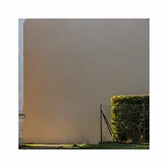 Côté jardin (hélène chantemerle) Tags: bosquet bâtiments extérieur formatcarré murs pelouse photosderue plantes soleil lumière light sun outside wall bush empty