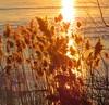Sunset (anng48) Tags: sunset coucherdesoleil villelasalle monttreal stlawrenceriver fleuvedustlaurent quebec qc canada