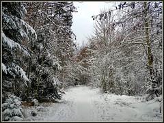 Verlaufensgefahr (almresi1) Tags: schnee snow weg path way wald welzheim winter