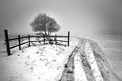 Winter in Skåne (Justin S Reid) Tags: ifttt 500px winter nature tree white snow black track sweden skåne dierjscreensaver