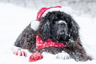 Snow nose & Santa Hat ect....