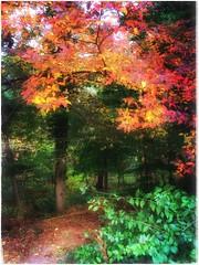 (Ruth Nicholas) Tags: fallfoliage vibrantleaves yellow orange red green magicaltone walkingpath woods trees