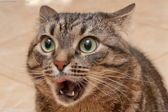 Амурчанин реализовал кота-экстрасенса за5 млн. руб.