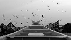 (SANAND K) Tags: new boats kollam birds crow sea sky harbour thankasseri kerala sanandkarun