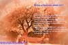 BONNE ANNEE 2017 (photos.osmose) Tags: année nouvelle arbres art ambiance artiste ballade couleurs campagne calme composition décoration découverte évasion extérieur foret feuilles floral forêtexpressioncouleursarbrescampagnebordsducanalombre festival 2017 heureuse hiver jour lumière lieux miroir paysage paysages fêtes ombragé ombrelumièreinsolitetempssoleil promenade regard rêverie