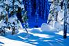 Into the Shadow (Roshine Photography) Tags: comoxvalley mtwashingtonalpineresort paradisemeadows vancouverisland countries canada strathconapark britishcolumbia places snowshoeingtrip comoxstrathconac ca
