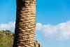 Closeup palm (lorenzoviolone) Tags: cloud d5200 dof dslr hill nikon nikond5200 palm reflex vsco vscofilm depthoffield detail fujivelvia50 palmtree roadtrip:tuscany=jan2017 shallowofdepth streetphoto streetphotocolor streetphotography portoercole toscana italy