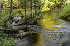 Northern Michigan Streams - Psalm 42.1 (TAC.Photography) Tags: bibleverse psalm psalm421 scriptureverse streams twinstreams sevenbridges northernmichigan