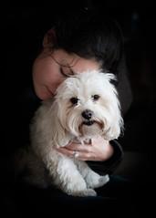 Shi n Sky (sbess) Tags: dog pet cute love sweet portrait animal canine