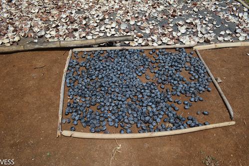 drying nangae nuts