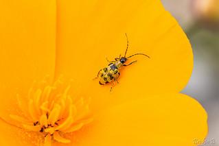 Tombé dans le pollen !