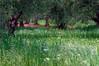 _green hope_ (* landscape photographer *) Tags: italy verde primavera valle natura campo lucania speranza profumo 2015 nikond90 salvyitaly