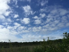 Clouds And Chemtrails - Western Ireland - June 2015 (firehouse.ie) Tags: county ireland sky cloud west weather june clouds midwest clare skies control engineering manipulation spray western and population geo chemtrails manufactured spraying 2015 haarp geoengineering