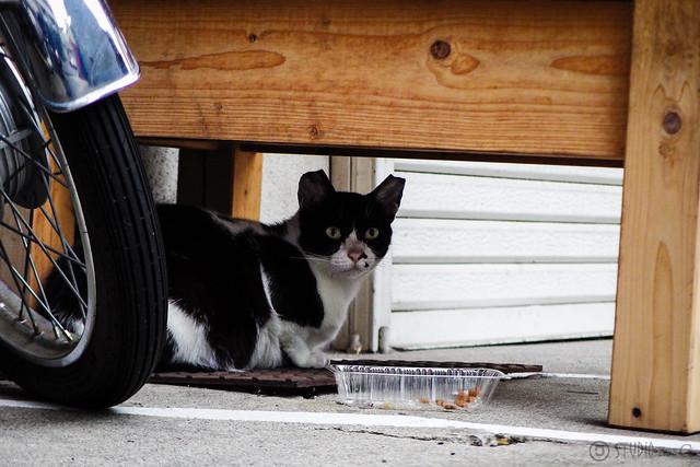 Today's Cat@2015-06-26