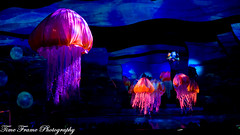 Jellies (Time Frame Photography) Tags: show lowlight nemo stage disneyshow a6000