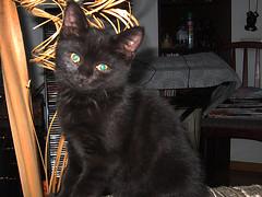 Marsa kitty. Marsa and Barsa Cats. www.marsabarsa.com. (Marsa Barsa) Tags: cats cat kitten kitty kitties marsa  barsa          marsabarsa wwwmarsabarsacom
