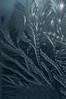 20140119-DSC_0029 (shmikov) Tags: frostwork