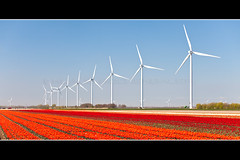Senvion 3.2M windfarm Zeewolde, Netherlands (Rockenbauer K.) Tags: red sky flower holland rot tower netherlands windmill dutch field energy power wind blossom energie wing nederland feld himmel tulip electricity blade blume blatt turm blte windrad strom windfarm renewable windpower windenergy rotor niederlande acker tulpe zeewolde gondel agrar windkraft nacelle windmhle elektrizitt flgel windpark windenergie maschinenhaus eolienne warningstripes repower 32m 3xm erneuerbar warnmarkierung senvion