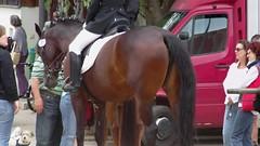 IMAG0043 (dreiwn) Tags: horse pony pferde pferd equestrian horseback reiten horseriding showjumping fellbach dressage hänger reitturnier dressur pferdekopf dressuur pferdesport springreiten reitverein pferdehänger turnierreiten dressurprüfung rvfellbach