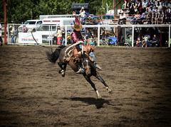 Flying High (brentus69) Tags: horses canada cowboys nikon cattle action bruce alberta rodeo bronc bucking d4 saddlebroncriding nikond4 brucealberta brucealbertarodeo